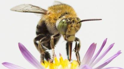 Gardeners, bee prepared: review your plantings in Pollination Week