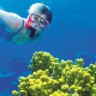 Why coral bleaching is like a bushfire