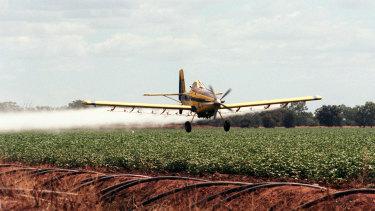 Crop dusting a cotton field near Warren.
