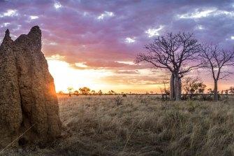 Sarang semut dan pohon boab di dekat Sungai Logue, sebelah timur Broome. Area tersebut berada dalam wilayah izin eksplorasi Buru Energy.