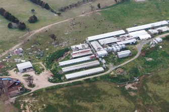Wally Perenc is now running a cattle farm on the same property as his now-defunct piggery in the Southern Tablelands.