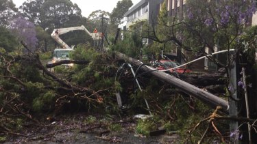 SES crews clear roads and assist with damaged homes.