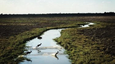 The Great Cumbung Swamp was part of a property purchased by The Nature Conservancy and its partners in 2019.