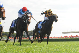 The rematch between Funstar and Probabeel in the Vinery Stud Stakes will be a highlight of Saturday's Rosehill card.