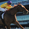 Gai has Wolfe on scent of Brisbane Cup