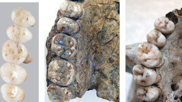 The teeth and partial jaw fragments of Homo luzonensis, dated to at least 50,000 years old.