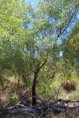 The bushland.