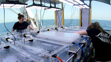 Researchers on the RV Solander examine coral samples being tested in the mobile lab