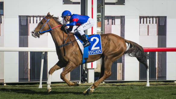 Olive to Bring A Secret to Tony Campbell Cup