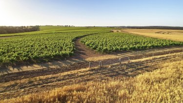 The vineyard of Swinney Wines in the Great Southern wine region of Frankland River.