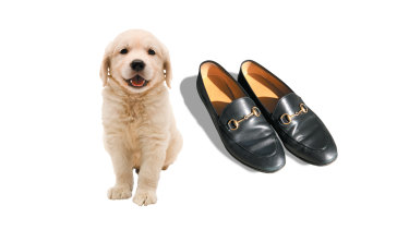 Is it still puppy love when your fur baby destroys your Gucci loafers?