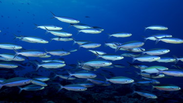 Eavesdropping on fish could give valuable insight into the health of our waterways.