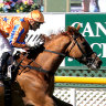Gallen's star horse set to be retired with rare eye problem