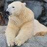 Polar bear mum dies suddenly at Sea World
