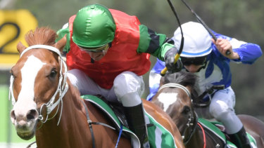 Hard to hold out: Moobi appears the one to beat in the Country Championships qualifier.