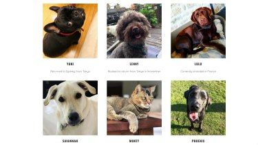 Some of the pets that have been stranded overseas.