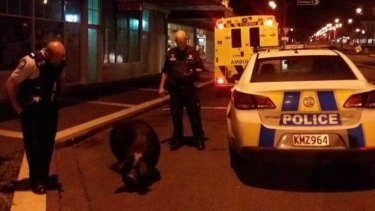 Police with the large pig on Sunday night.