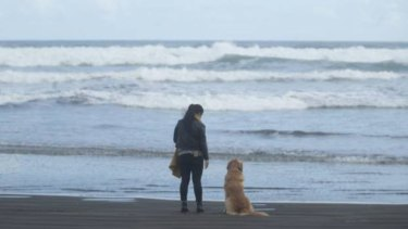 He'll say hello to Bethells Beach regulars, but always keeps an eye on the water for dad.