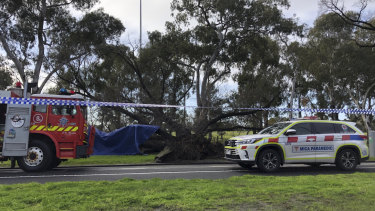 A person was rescued from under a tree in Princes Park.