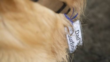 Milo's tag tells other beach users he's not lost.