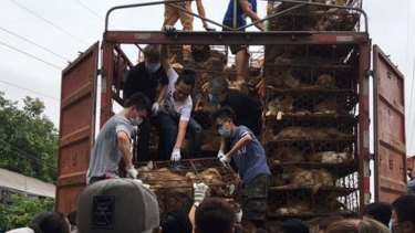 More than 100 Chinese activists rescue dogs and cats from a truck headed to slaughterhouses in Guangzhou province on the eve of China's annual Yulin dog meat festival in 2017.