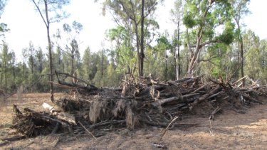 Illegal clearing in north-west NSW; rates of native vegetation destruction ramped up in the two years to June 2017.