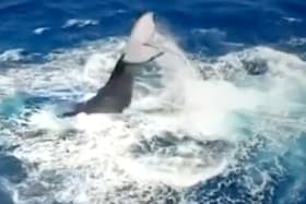 Annoyed whale swats swimmer with tail for getting too close