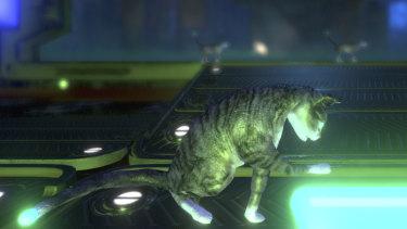 Inside the Neon Cyborg Cat Club