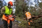 ADF personnel clearing trees in the Dandenongs on Monday.