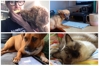 Clockwise from top left: Ginger the groodle (with GW photo editor Tegan Sadlier), Nina the chihuahua, Marcello the ragdoll, and Luna the staffie.