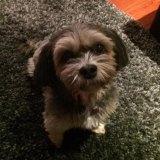 Bel Fuller's dog Coco.