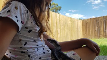 Brisbane Bird and Exotics Veterinary Services operated on three-and-a-half-year-old python Tigerlilly after significant trauma to its teeth that left it unable to eat.