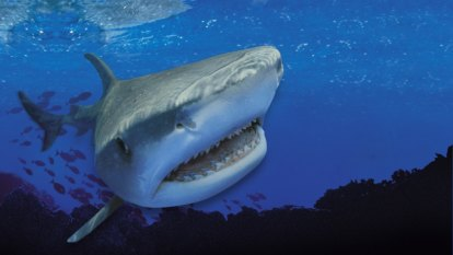 Shark attacks could take bite out of Queensland's tourism sector