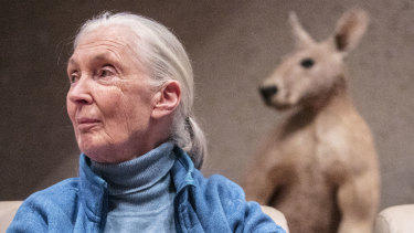Jane Goodall during a visit to Brisbane in 2017 to meet students and teachers involved in her foundation's Roots and Shoots school program.