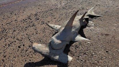 Dead sharks found at popular coastal Kimberley tourist spot