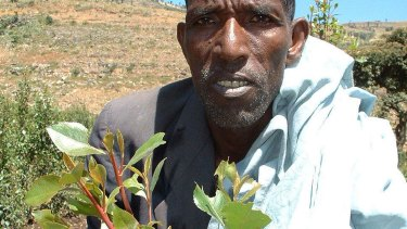 Farmer Ahmed Mume started growing khat on his coffee farm in Deder, eastern Ethiopia a decade ago.