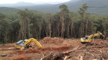 A clear-felled forest in Victoria's central highlands.