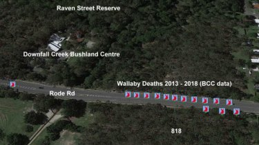 Eighteen wallabies have died in the past five years on a small section of Rode Road at Chermside trying to cross from Downfall Creek to the six hectares of bushland. Other deaths are just outside the picture border.