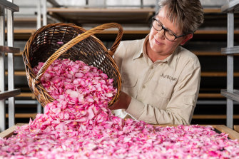At the Jurlique flower farm in the Adelaide Hills, pink roses are harvested by hand and then dried.