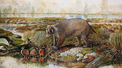 The 'giant wombat' fossil that had to be discovered twice