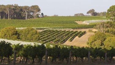 Vineyards at Leeuwin Estate in Margaret River.
