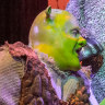 Shrek takes the stage for a fun, forgivably silly romp