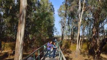 Is the fight over forestry versus conservation and tourism in Murray Valley National Park about to resume?