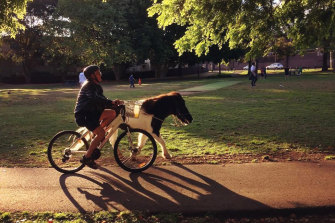 One of many unorthodox pets in Sydney, a pony that lives in the Inner West.
