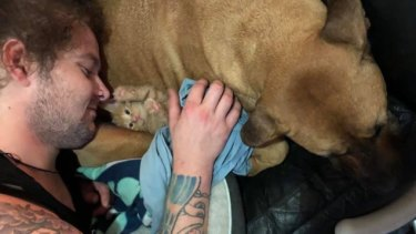 Major the dog stayed with his owner's body for five hours at highway crash