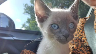 "Warragul family say they bought this kitten off Con Petropoulos in a Ballarat car park in June despite the seller telling the family his name was ""Tom"". She found him on Gumtree."