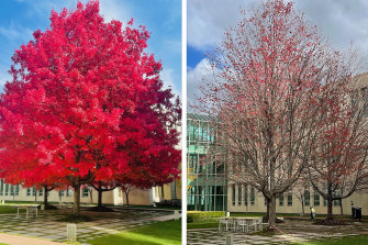 The budget tree as seen in Finance Minister Simon Birmingham's tweet and (right) the sad truth on budget day.