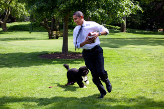 President Barack Obama plays football with the family dog Bo on the South Lawn of the  White House in 2009.