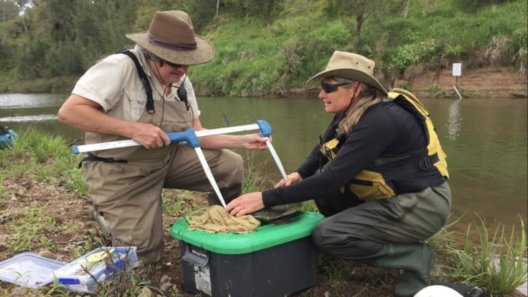 A Mary River turtle being measured by Charles Darwin researchers including Marilyn Connell.