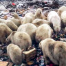 'Political exile' in Arctic bears the punishment for opposing Putin